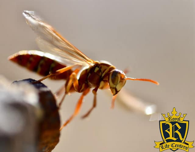 Who Gets High On Methamphetamine Made From Wasp Spray?